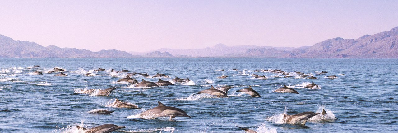 a pod of dolphins swimming in the ocean.
